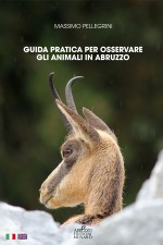 Guida pratica per osservare gli animali in Abruzzo